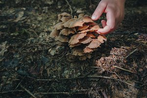Picking up mushrooms in the forest