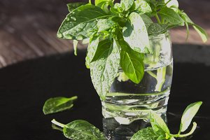 fresh basil in a glass, selective focus
