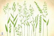 Wild herbs, hair grass, wheat