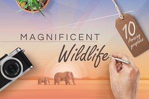 Magnificent wildlife graphics