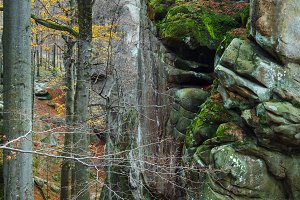 lofty stones in autumn forest