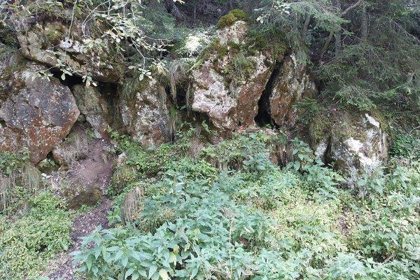 Wild rocks and plants