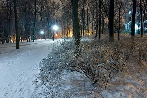 Ice-covered tree in night park