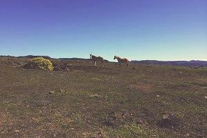 Horses on Gran Canaria