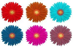set of gerbera flower