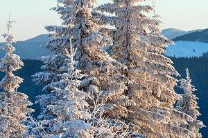 Sunrise winter mountain landscape