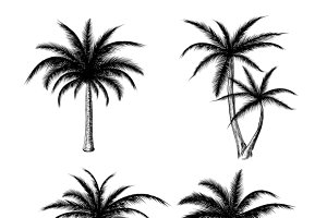 Hand drawn palm trees sketch set