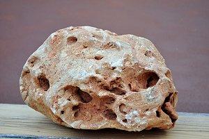 stone liked alien skull