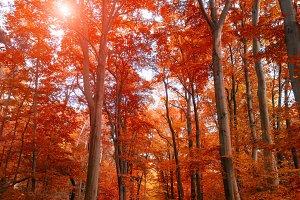 Pathway through the autumn park