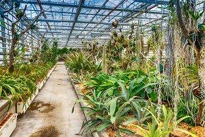 Interior botanic glasshouse