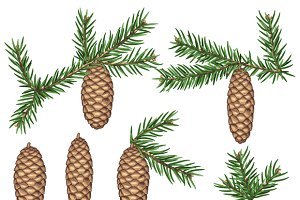 Set of fir branches and cones.