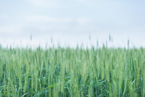 Grass Nature Inspired Stock Photo