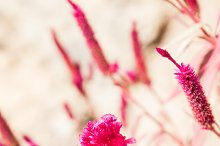 Pink Nature Inspired Stock Photo