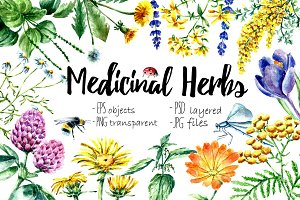 Watercolor medicinal herbs