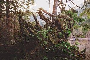 Labyrinth tree