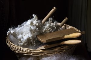 Wool for Carding