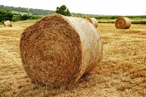 haystack on the field