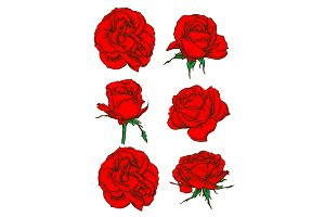 Red rose icons with blooming flowers