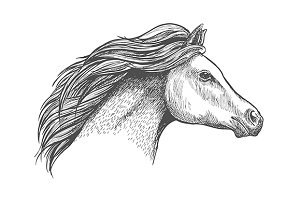 Racehorse mare head sketch