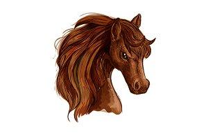 Brown arabian mare horse