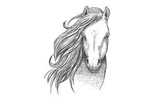 Beautiful wild horse sketch