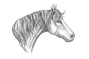 Racehorse head sketch