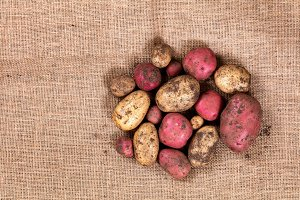 Organic Potatoes on Burlap