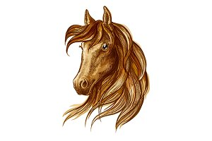 Brown stallion horse head