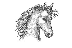 Sketched head of arabian horse