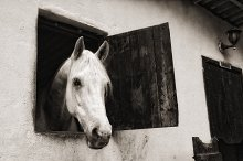male horse in stable