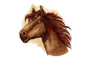 Brown mare horse head