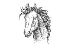 Mare horse sketch