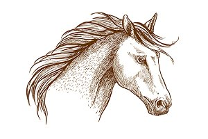 Sketched stallion horse icon