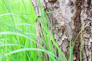 bark of tree with grass