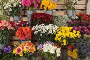 Grouped flowers in a flower shop