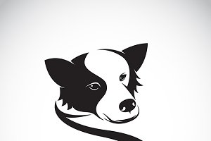 Vector image of a border collie dog.