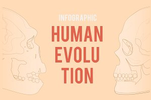 Infographic: Human Evolution