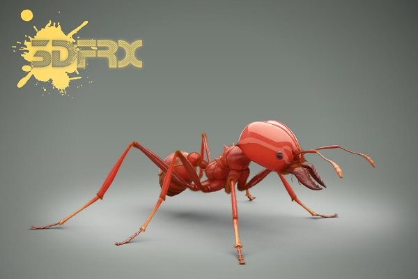 3D Animals: 3DFRX - ANT