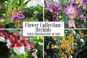 Orchid Flowers - 6 Stock Photos
