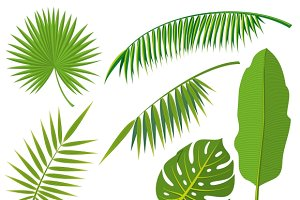 Tropical palm tree jungle leaves