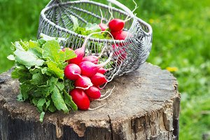 fresh red garden radish