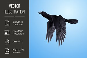 Black raven on blue background