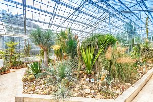 Palm tree and cactus