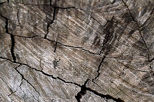 texture of bark tree