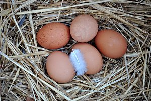 eggs, feather and straws