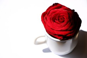 Rose in cup