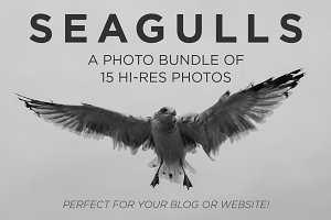 Seagull Photo Bundle