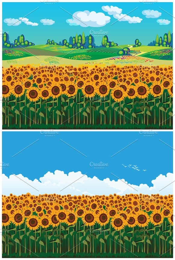 Picturesque Field of Sunflowers