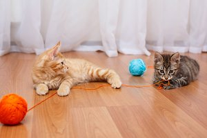 Kittens playing with thread.