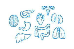 outline icons about Human Anatomy
